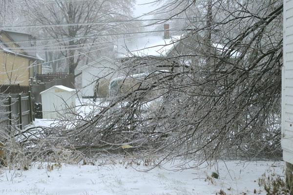 Tree fallen in back of house