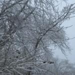 Trees of ice